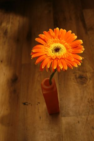 Orange flower in a vase on brown floor photo