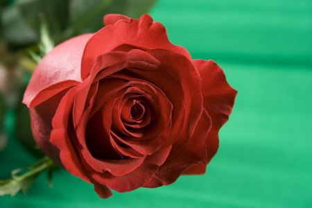 red rose over green Stock Photo - 2426222