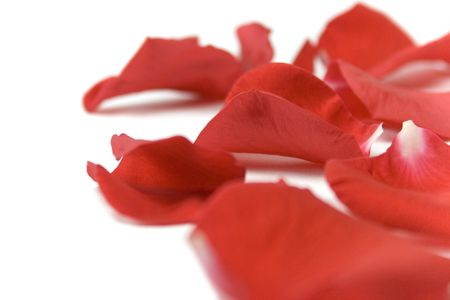 red petals over white background Stock Photo - 2426271