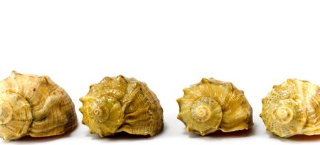 four cockleshells on white background photo