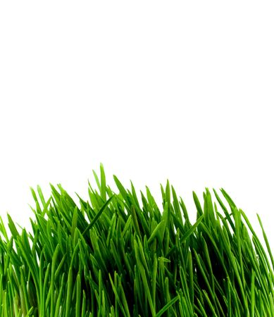 green grass close-up over white photo