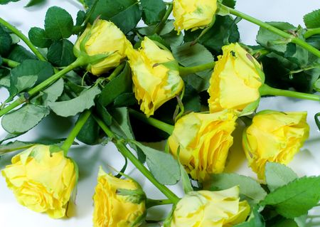 yellow roses background close up Stock Photo - 2774043
