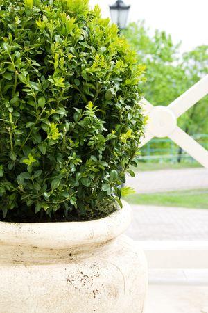 Plant in big ceramic pot in park photo