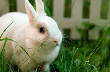 white rabbit near the fence photo