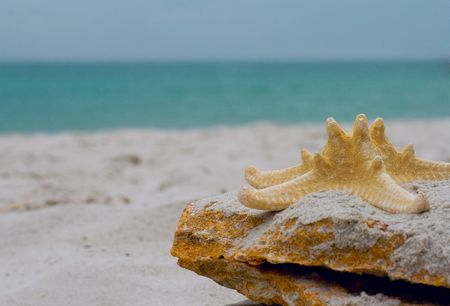 starfish on a stone over sea background photo