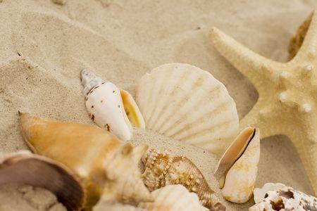 shells and starfish on sand close up photo