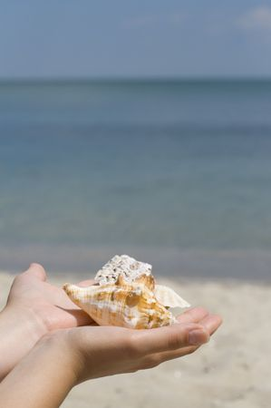 hands with shells on sea background photo