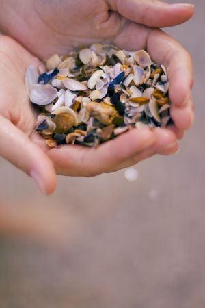 seashells in womans hands photo