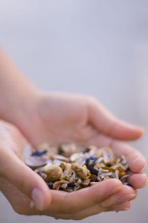 seashells in womens hands photo