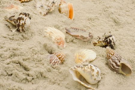 a lot of shells on sand background photo