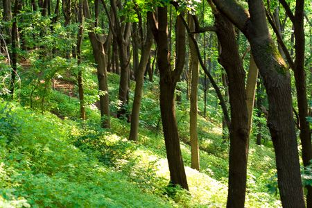 summer green forest photo