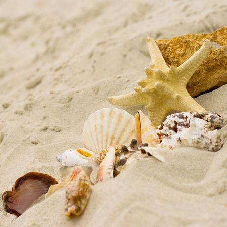 starfish and shells on sand background photo