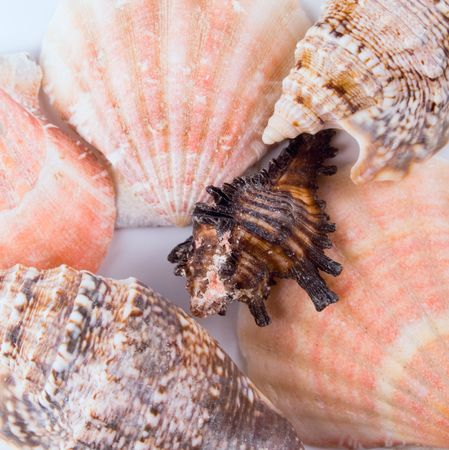 various kinds of shells background photo