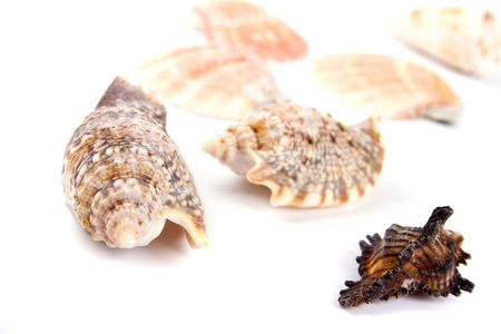 various kinds of shells on white background photo