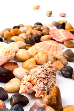 sea shells and pebble beach collection photo
