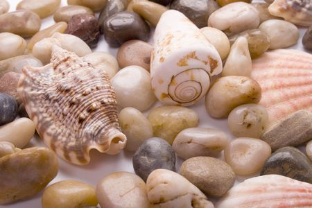 sea shells and pebble beach collection background photo