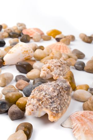sea shells and pebble beach collection photo