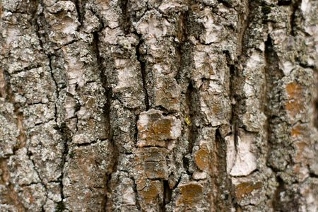 old tree bark close up background photo