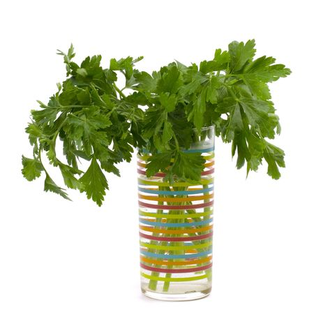 bouquet of fresh parsley in glass isolated on white background photo
