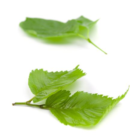 green wet leaves isolated on white background Stock Photo - 4890425