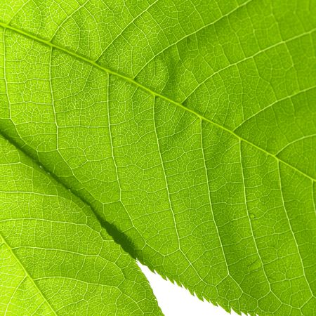 texture or structure of a green leaf closeup   photo