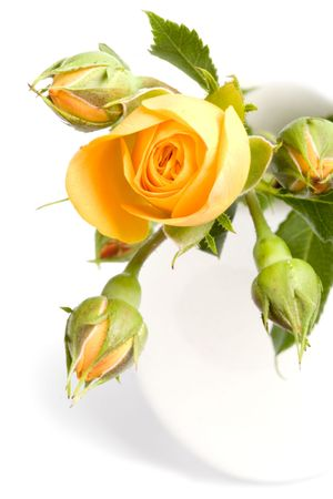 yellow flowers bouquet closeup on white background photo