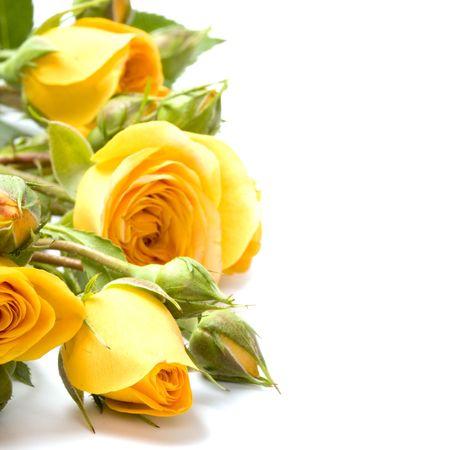 Gele bloemen close-up op witte achtergrond  Stockfoto - 5951603