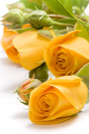 gele bloemen close-up op witte achtergrond