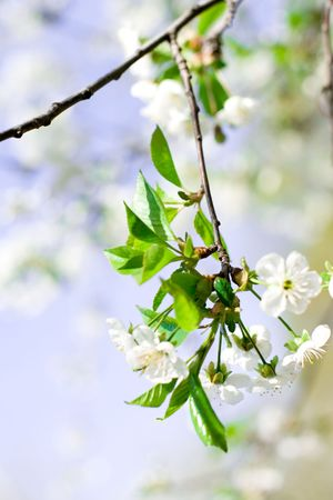 flower tree on natural background  photo