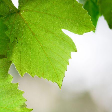 green leaves closeup photo