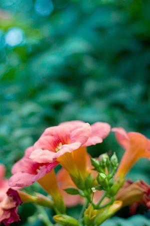beautiful orange flowers closeup photo