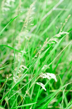 green grass background  Stock Photo - 7715674
