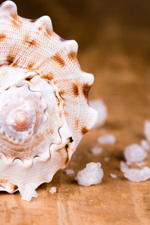 seashell and salt closeup on wooden background photo