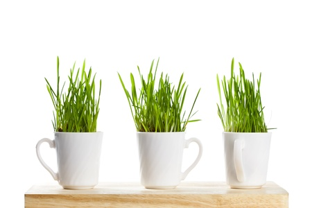 fresh green grass in coffee cups isolated on white background (sample text) Stock Photo - 8697607