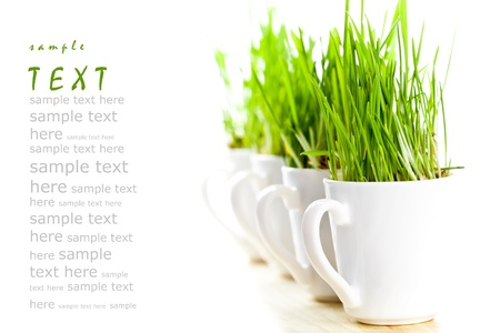 fresh green grass in coffee cups closeup on white background (sample text) Stock Photo - 8697610
