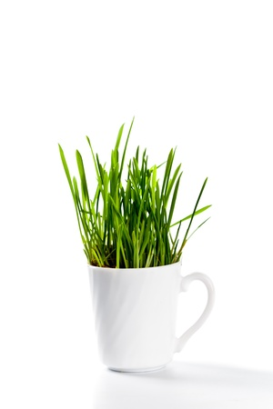 fresh green grass in coffee cup isolated on white background Stock Photo - 8697619