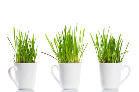 fresh green grass in coffee cups isolated on white background Stock Photo - 8753767