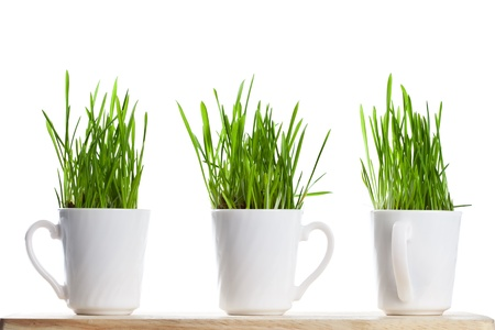 fresh green grass in coffee cups isolated on white background Stock Photo - 8768346