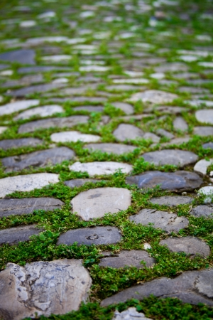 cobbles with moss on a pavement in an old city  photo