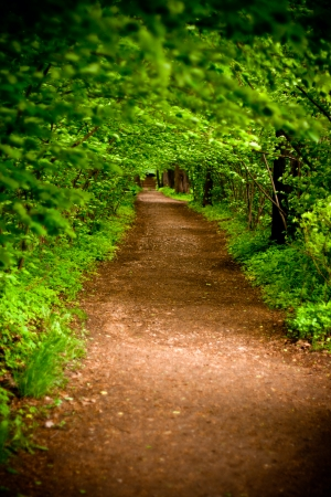 mystical alley through dark forest with lighting, fairy landscape  photo