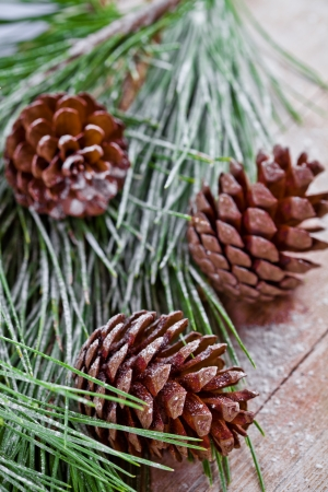 christmas fir tree with pinecones on a wooden board  Stock Photo