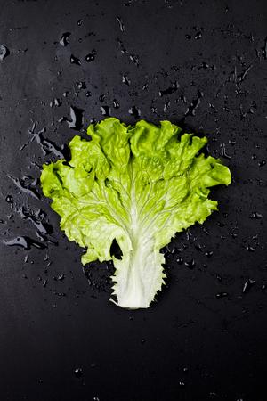 Green organic lettuce salad leaf on black wet background. Top view on black background. Zdjęcie Seryjne - 121869958
