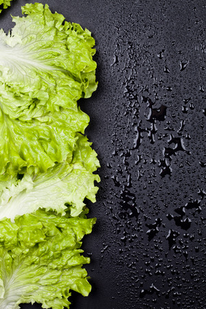 Green organic lettuce salad leaves frame on wet black background. Top view on black background vith copy space. Zdjęcie Seryjne