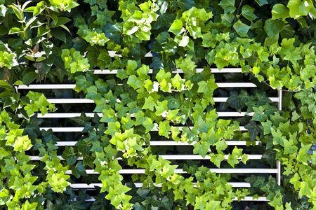 Green summer leaves and white fence pattern background. Natural background and wallpaper.
