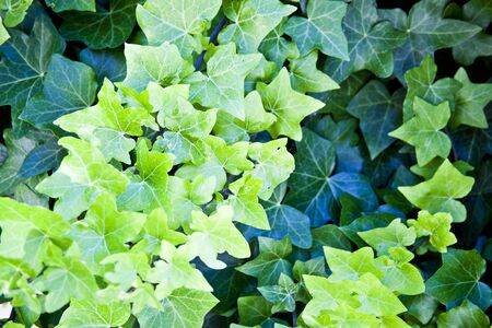 Green summer leaves pattern background. Natural background and wallpaper. Stockfoto