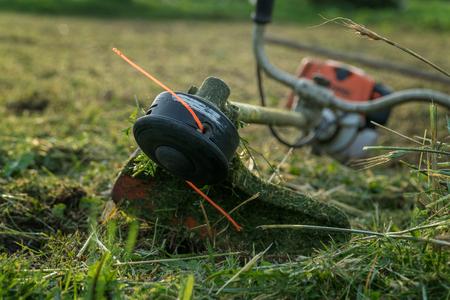 트리머 작업 후 풀밭에 놓여 있습니다.