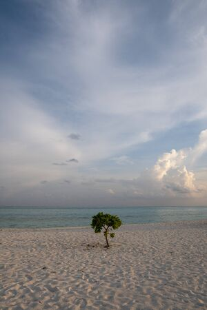 Lone tree beside sea with blue sky and white clouds in the everning Stock fotó