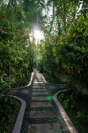 Stone path in an exotic garden. The sun is shining through the green