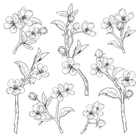 Arbre en fleurs. Définir la collection. Branches de fleurs botaniques dessinées à la main sur fond blanc.