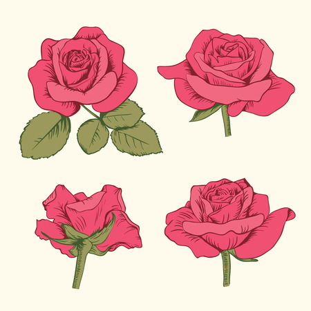 Set collection of red roses with leaves isolated on white background. Vector illustration. Can use for greeting cards, wedding invitations, patterns.